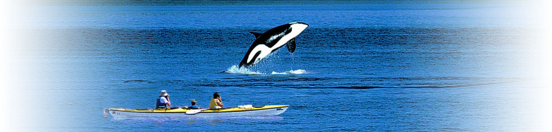 Breach-Orca-Kayak-Washington-1920x460-4