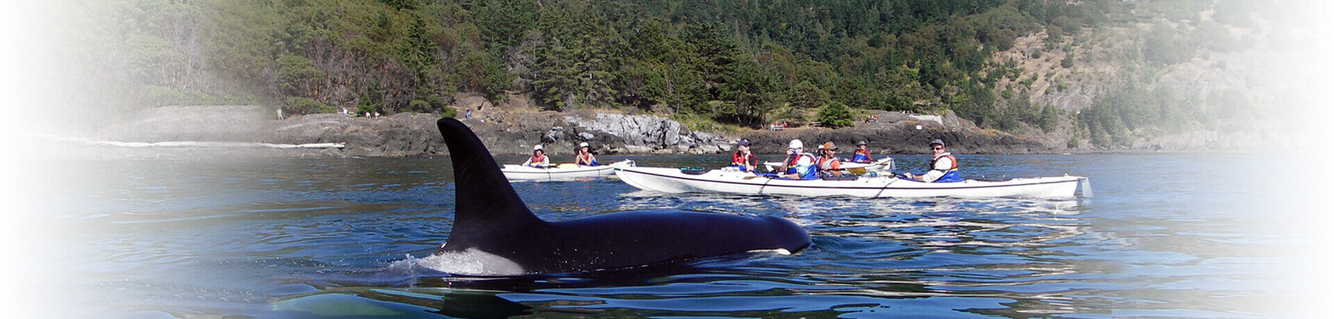 Kayaking-Orca-Whales-Lime-Kiln-1920x460-4
