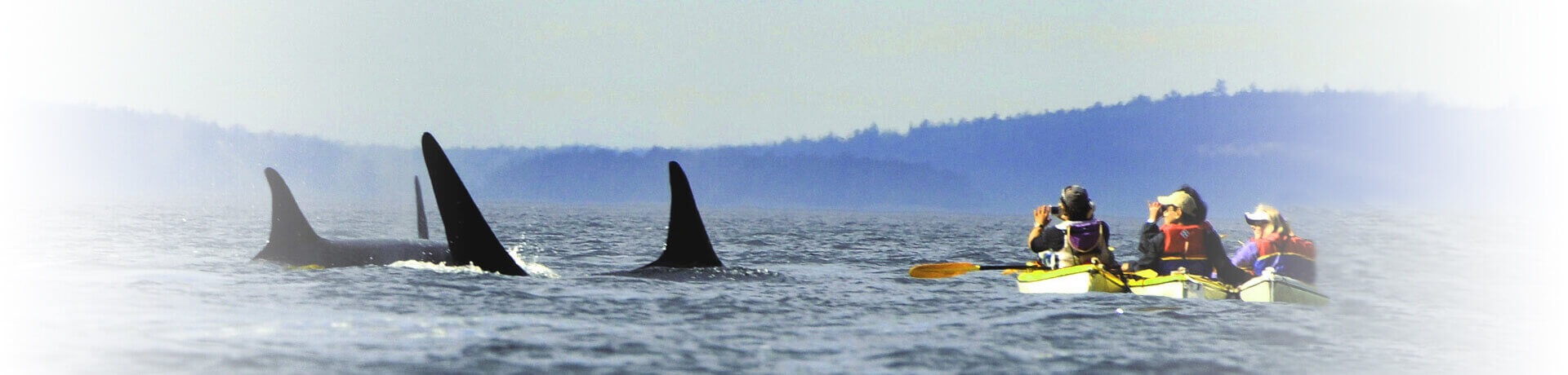 Orca-Whales-Kayaking-Washington-1920x460-4